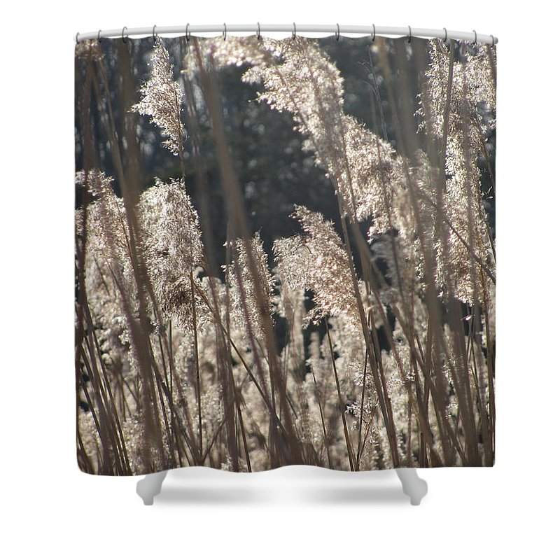 Golden Brown Grass Photographs Canvas Prints Reeds Nuetral Colors Landscape Winter Wetland Images Winter Marsh Photo Prints Maryland Cheasapeake Tributary Shower Curtain featuring the photograph Golden Brown by Joshua Bales