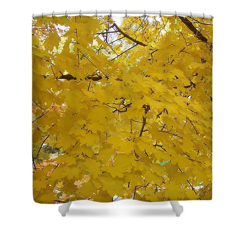 Fall Autum Trees Maple Yellow Shower Curtain featuring the photograph Golden Canopy by Karin Dawn Kelshall- Best