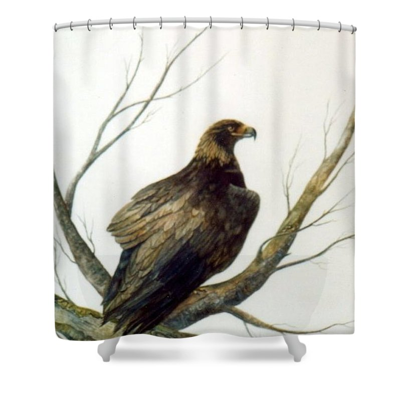 Eagle Shower Curtain featuring the painting Golden Eagle by Ben Kiger