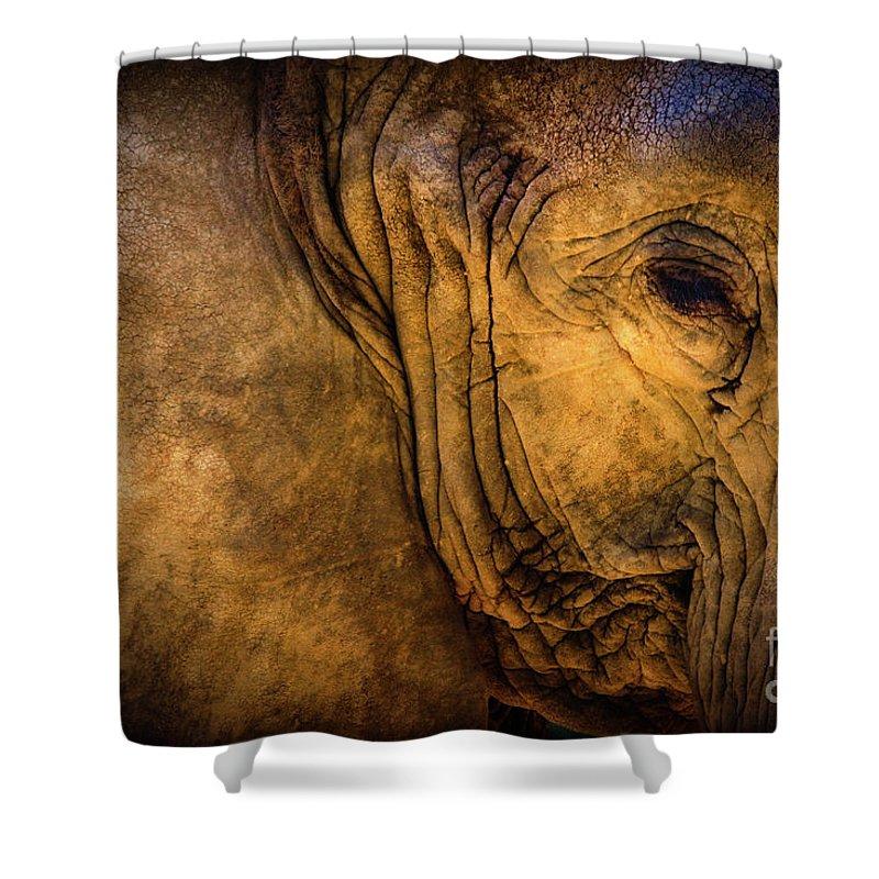 Golden Elephant Shower Curtain featuring the photograph Golden Elephant by Doug Sturgess