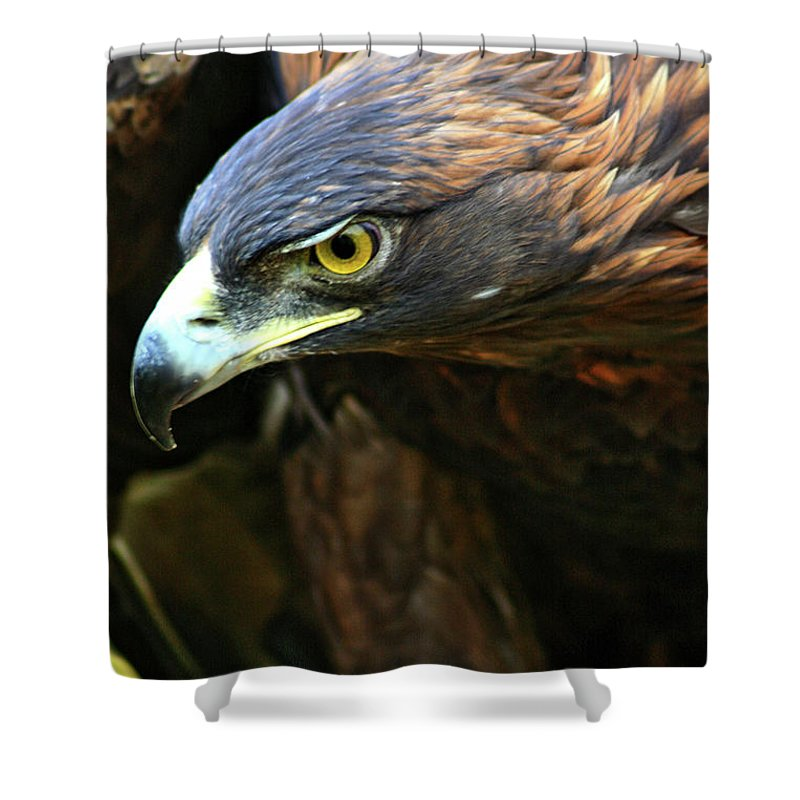 Golden Eagle Shower Curtain featuring the photograph Golden Eye by Scott Mahon