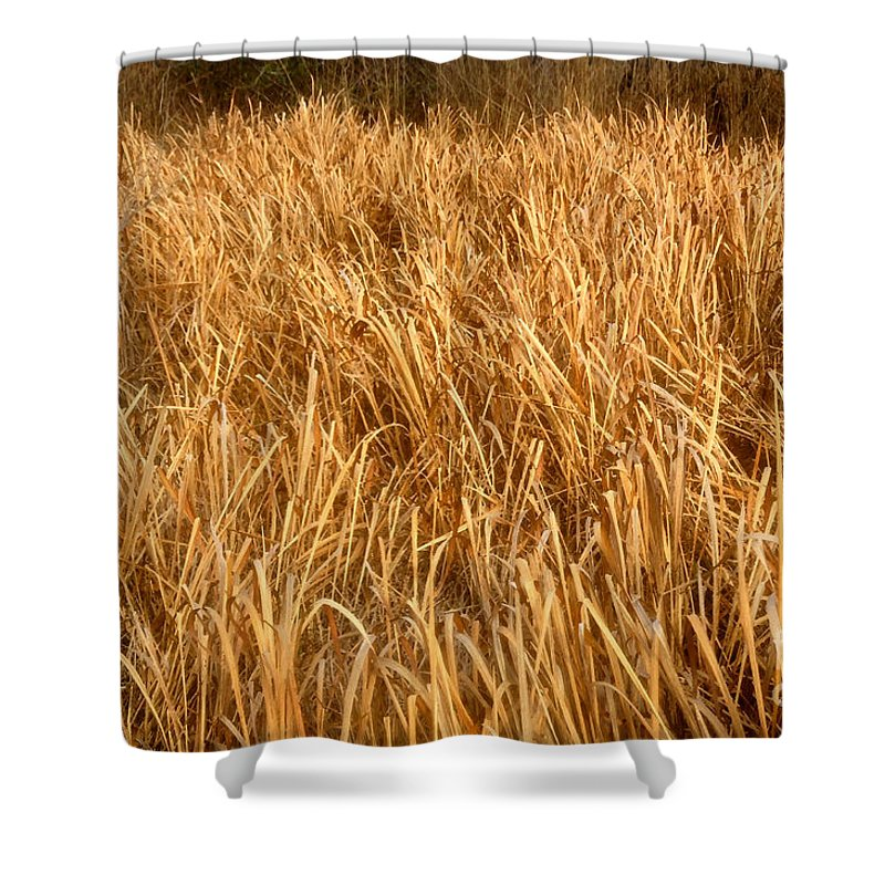 Golden Field Shower Curtain featuring the painting Golden Field by David Lee Thompson