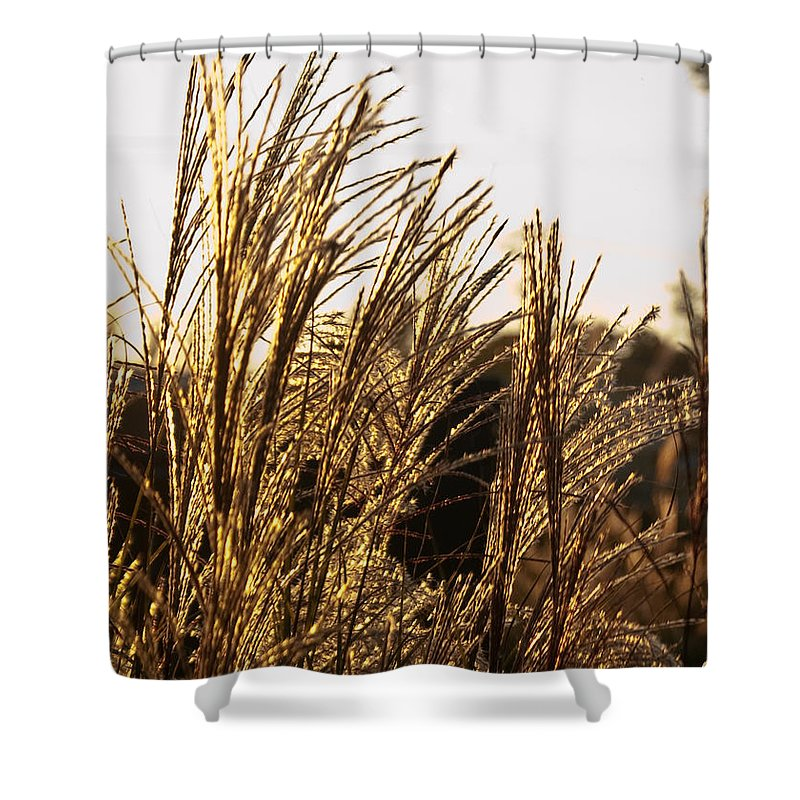 Golden Shower Curtain featuring the photograph Golden Grass Flowers by Douglas Barnett