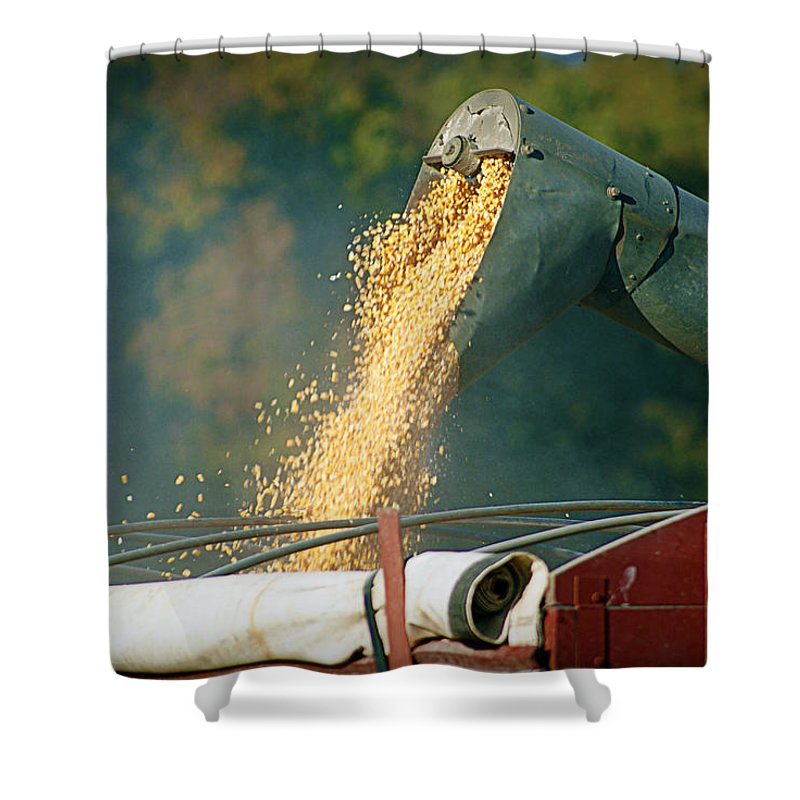 Corn Shower Curtain featuring the photograph Golden Harvest by Cricket Hackmann