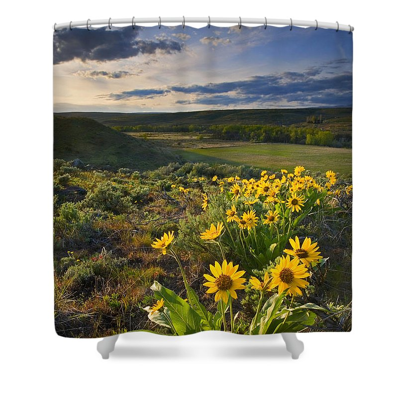 Balsamroot Shower Curtain featuring the photograph Golden Hills by Mike Dawson