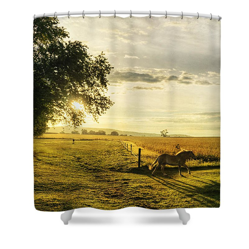 Horse Shower Curtain featuring the photograph Golden Horse Trot by Seth Dochter