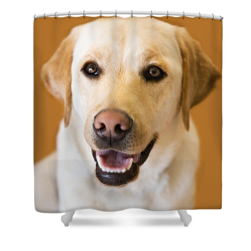 Lab Shower Curtain featuring the photograph Golden Lab by Marilyn Hunt