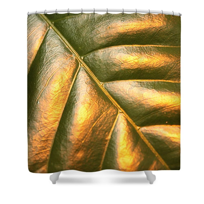 Gold Shower Curtain featuring the photograph Golden Leaf by Carol Groenen