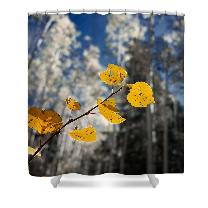 Aspen Shower Curtain featuring the photograph Golden Leaves Against A Muted Forest by Mary Lee Dereske