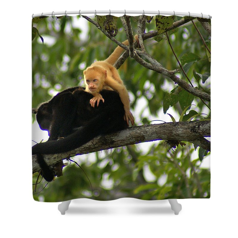 Monkey Shower Curtain featuring the photograph Golden Monkey by Heather Coen