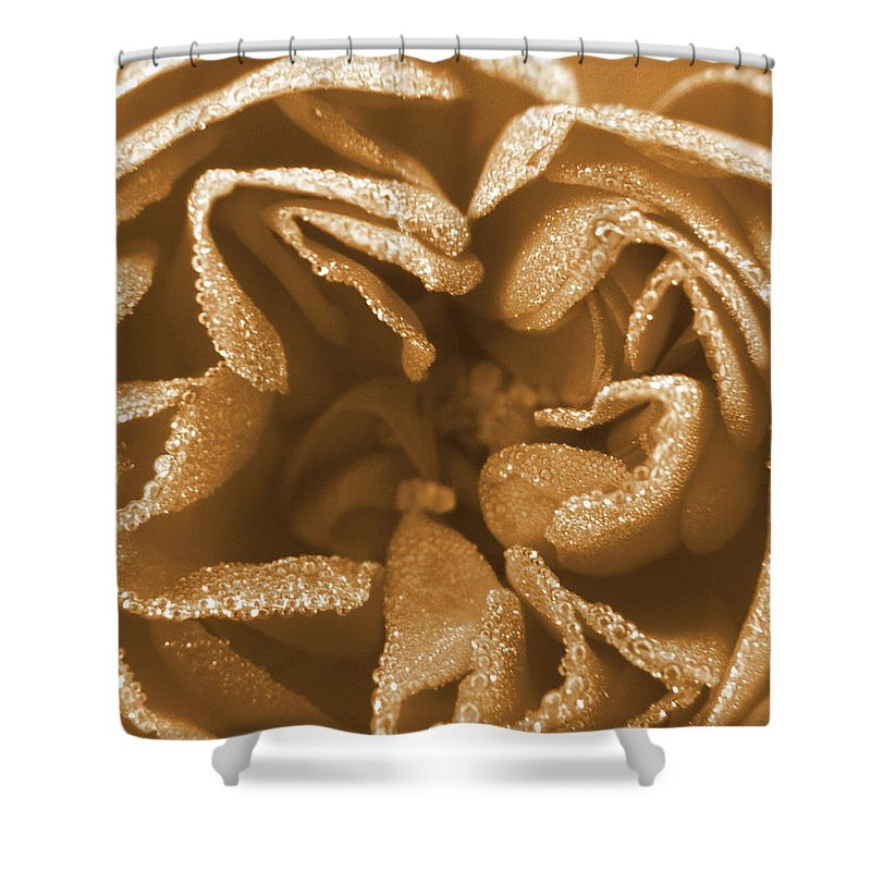Rose Shower Curtain featuring the photograph Golden Rose by Amy Fose