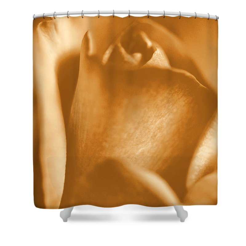 Rose Shower Curtain featuring the photograph Golden Rose Bud by Amy Fose