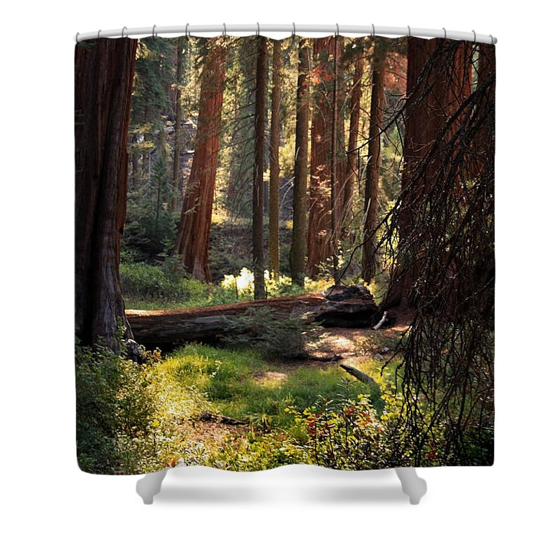 Sequoia Shower Curtain featuring the photograph Golden Silence by Joanne Coyle