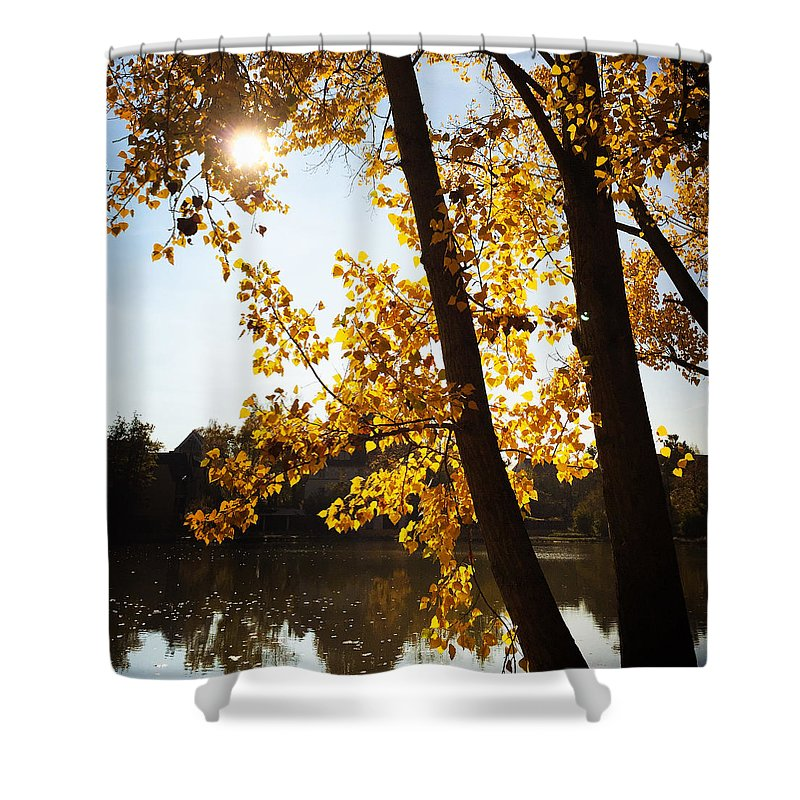 Tree Shower Curtain featuring the photograph Golden Trees In Autumn Sindelfingen Germany by Matthias Hauser
