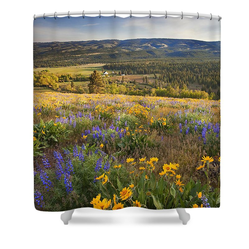 Wildflowers Shower Curtain featuring the photograph Golden Valley by Mike Dawson