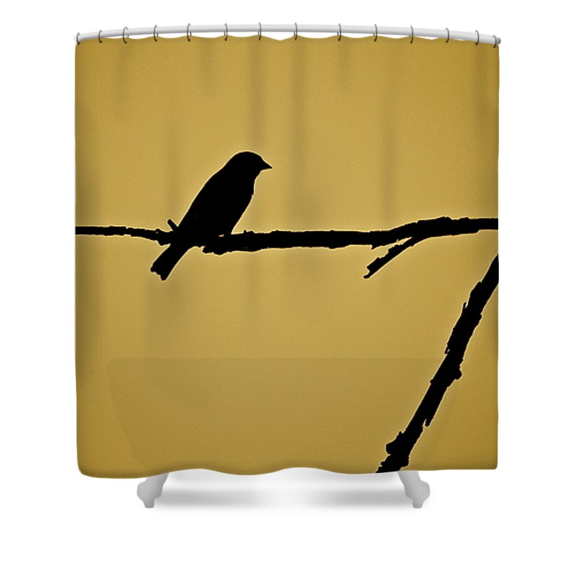Bird Shower Curtain featuring the photograph Goldfinch by Diana Hatcher