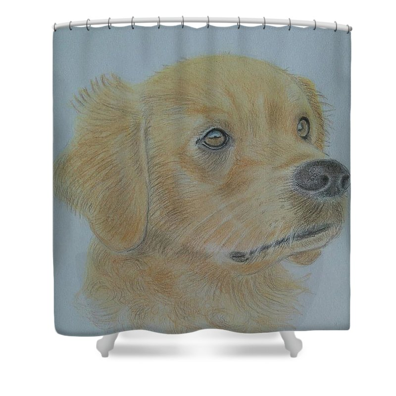 Dog Shower Curtain featuring the drawing Goldie by Paul Blackmore