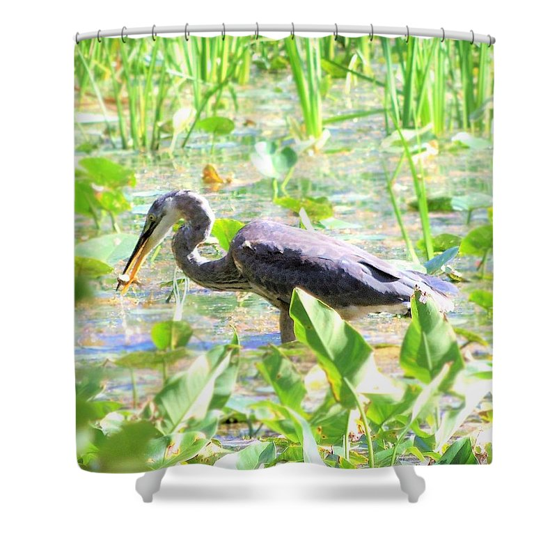 Nature Shower Curtain featuring the photograph Gone Fishin' by Cassandra Dice