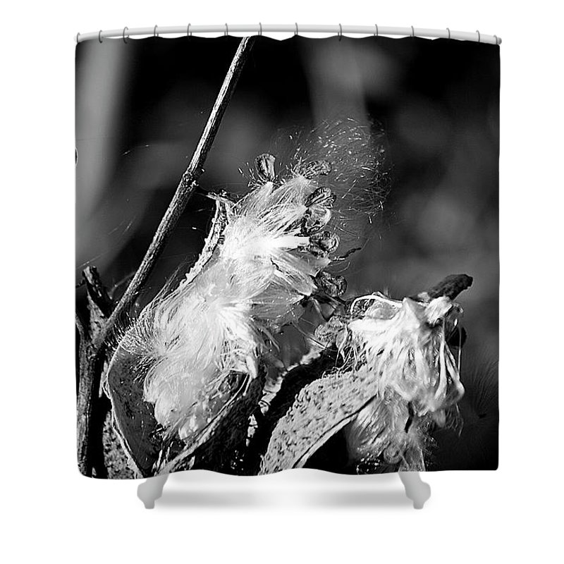 Seed Shower Curtain featuring the photograph Gone To Seed Milkweed 2 by Teresa Mucha