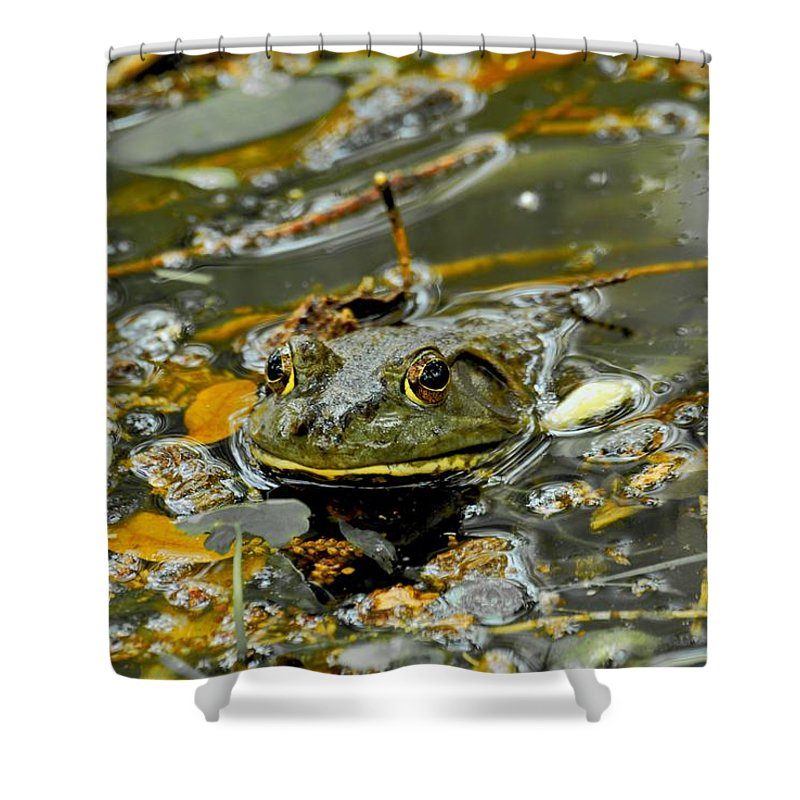 Frogs Shower Curtain featuring the photograph Good Morning by Donna Shahan