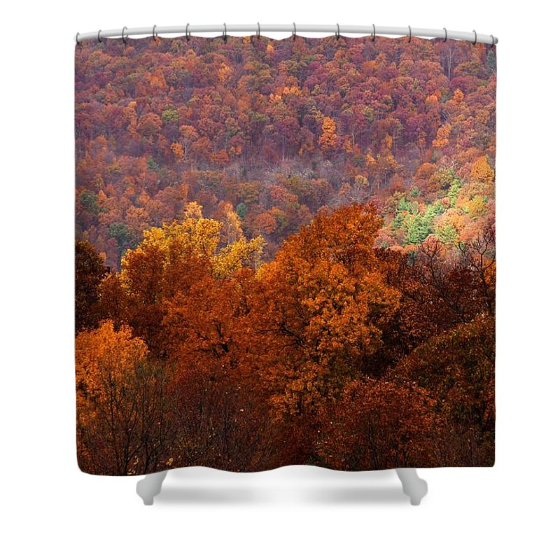 Mountains Shower Curtain featuring the photograph Good Tidings by Mitch Cat