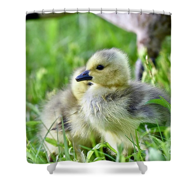 Adorable Shower Curtain featuring the photograph Goose Chick by Jeramey Lende