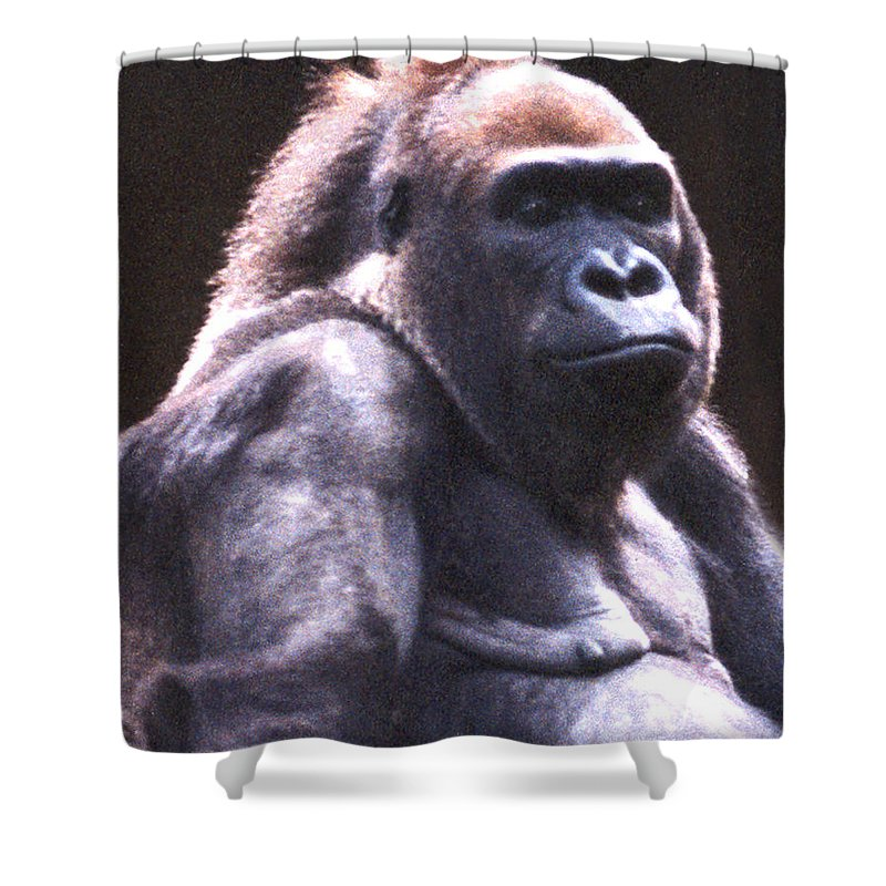 Gorilla Shower Curtain featuring the photograph Gorilla by Steve Karol