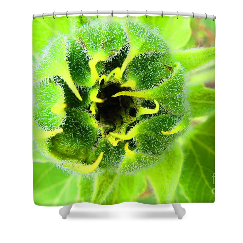 Sunflower Shower Curtain featuring the photograph Got Bugged by ChaNooga Annie