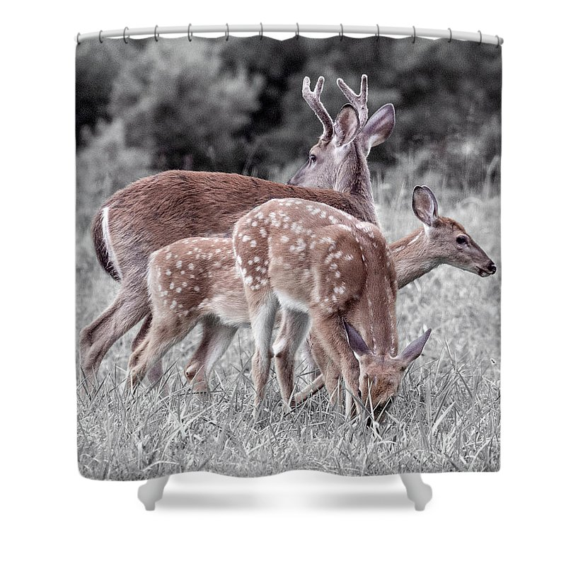 Deer Shower Curtain featuring the photograph Humor Got Some Doe And Two Bucks by Betsy Knapp