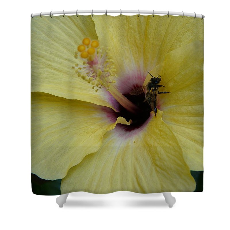 Nature Shower Curtain featuring the photograph Gotta Get Home by Valerie Ornstein