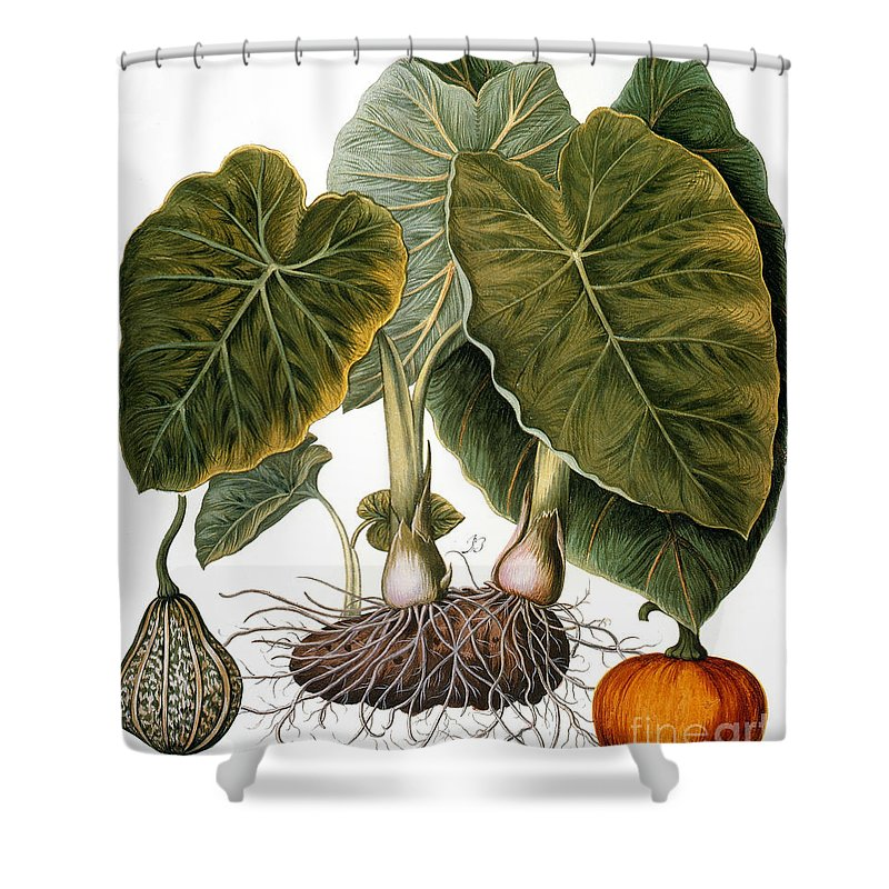 1613 Shower Curtain featuring the photograph Gourd, Taro, & Pumpkin by Granger