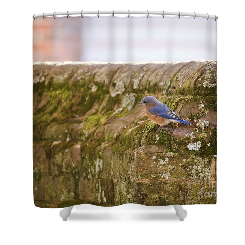 Bluebird Shower Curtain featuring the photograph Governor's Palace Bluebird by Rachel Morrison