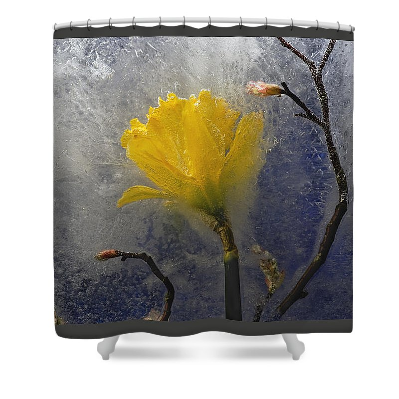 Floral Shower Curtain featuring the photograph Earth To Heaven by Carmen Moise