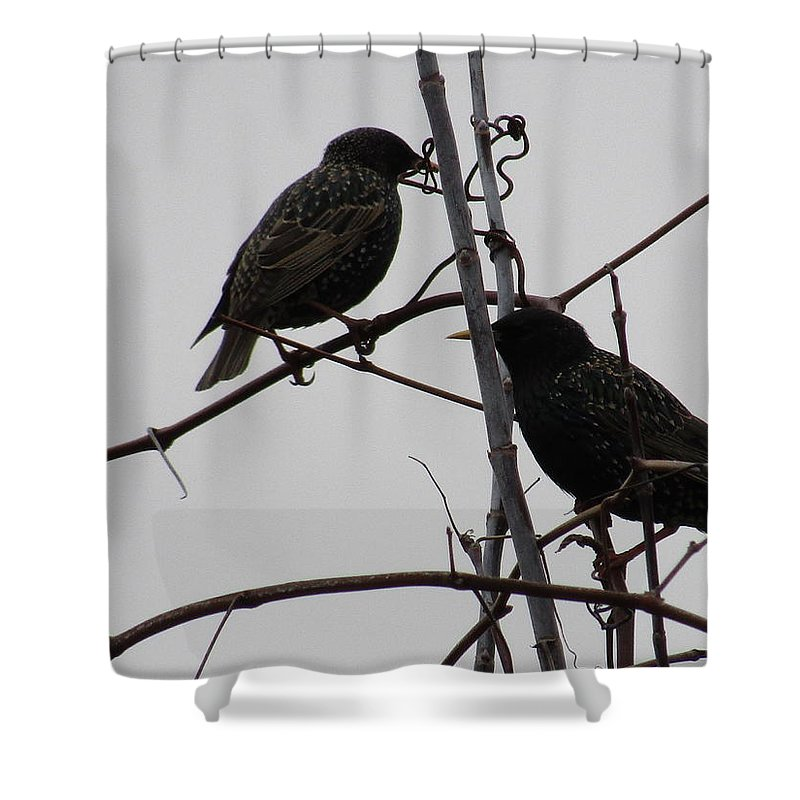 Bird Shower Curtain featuring the photograph Grackles On Branches by Jeremiah Wilson