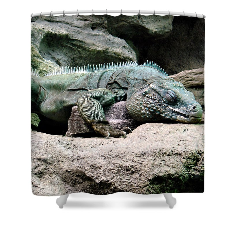 Lizard Shower Curtain featuring the photograph Grand Cayman Blue Iguana by Angelina Tamez