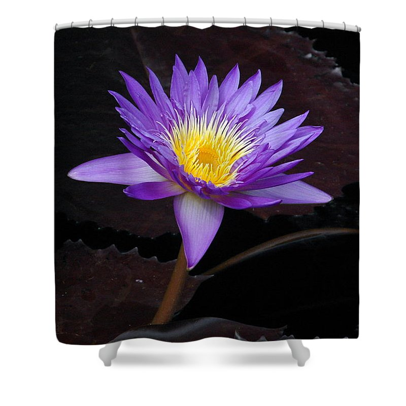Water Shower Curtain featuring the photograph Grand Entrance by Byron Varvarigos