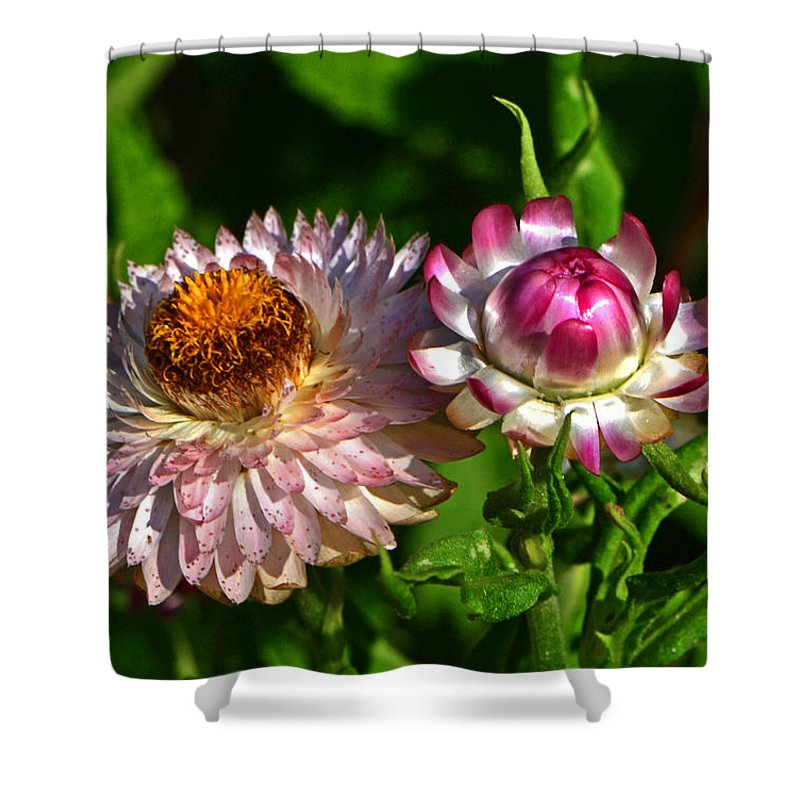 Floral Shower Curtain featuring the photograph Grand Opening - Before And After 001 by George Bostian