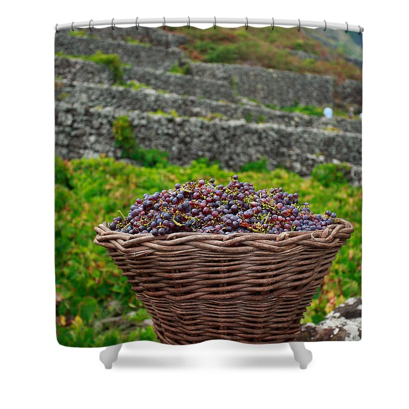 Basket Shower Curtain featuring the photograph Grape Harvest by Gaspar Avila