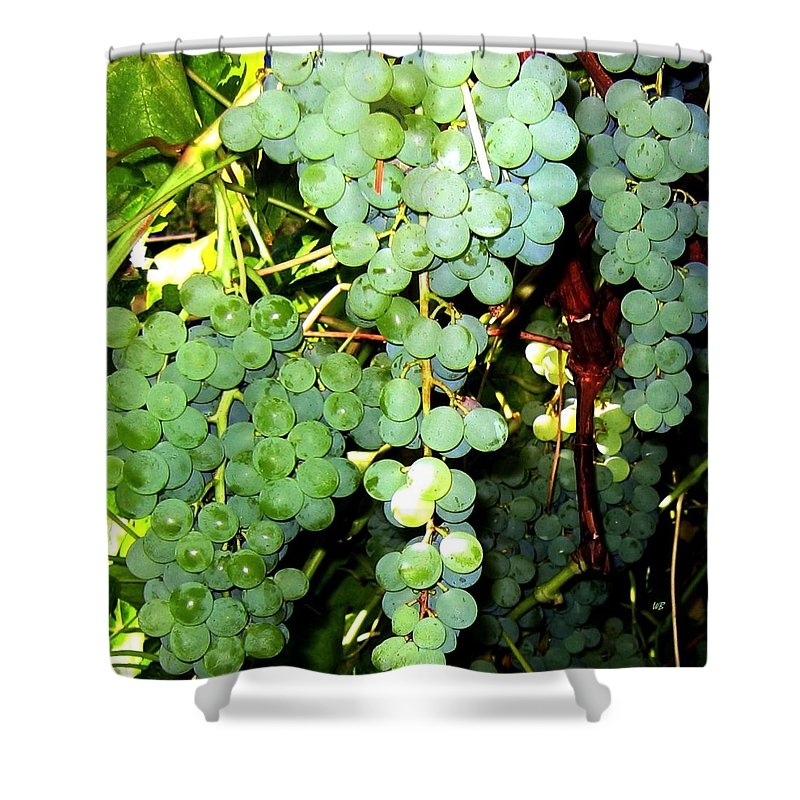 Grapes Shower Curtain featuring the photograph Grape Harvest by Will Borden