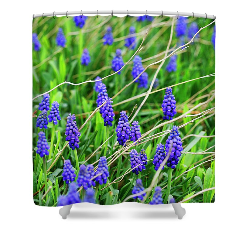 Grape Shower Curtain featuring the photograph Grape Hyacinth by Marilyn Hunt