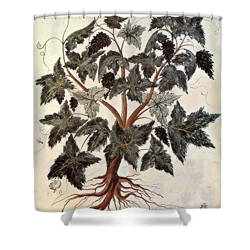 1229 Shower Curtain featuring the photograph Grapevine, 1229 by Granger