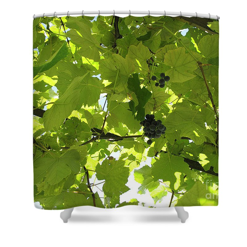 Horizontal Shower Curtain featuring the photograph Grapevine by Stefania Levi