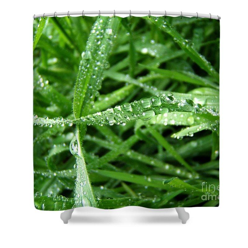 Artoffoxvox Shower Curtain featuring the photograph Grass Plus Water by Kristen Fox