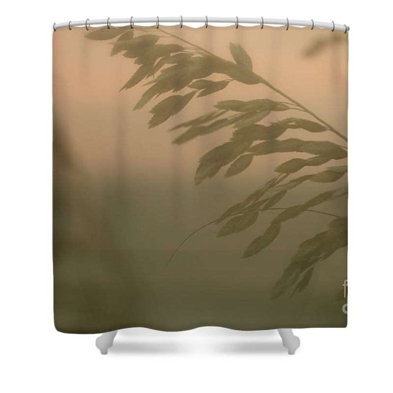 Green Shower Curtain featuring the photograph Grasses And Mist by Nadine Rippelmeyer