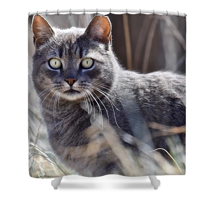 Animal Shower Curtain featuring the photograph Gray Cat In Woods by Jeramey Lende