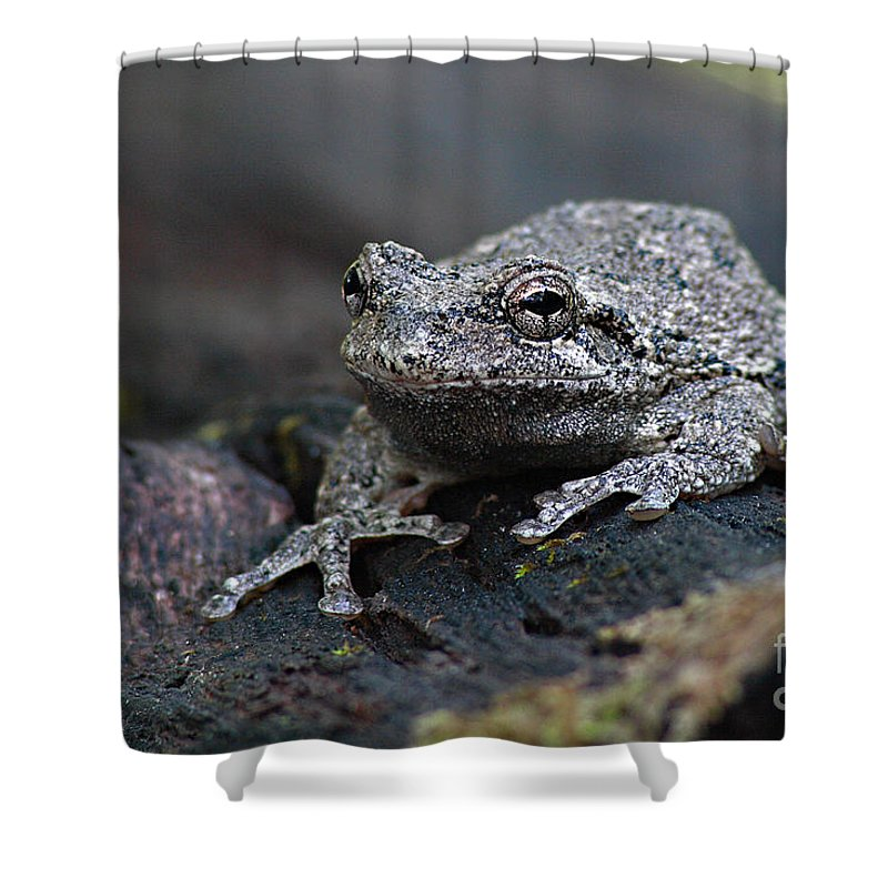 Frog Shower Curtain featuring the photograph Gray Treefrog On A Log by Max Allen
