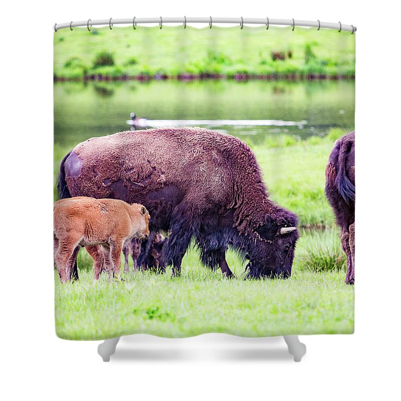 Bisons Shower Curtain featuring the photograph Grazing Bisons by Csaba Demzse