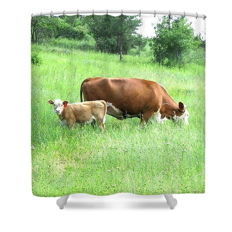 Cow Shower Curtain featuring the photograph Grazing Cow And Calf by Will Borden