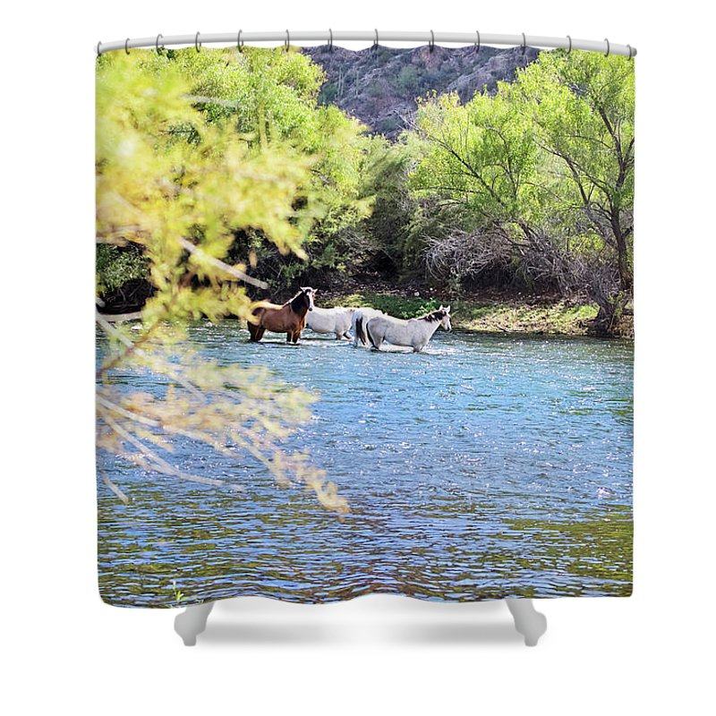 Horses Shower Curtain featuring the photograph Grazing Salt River Horses by Micah Williams