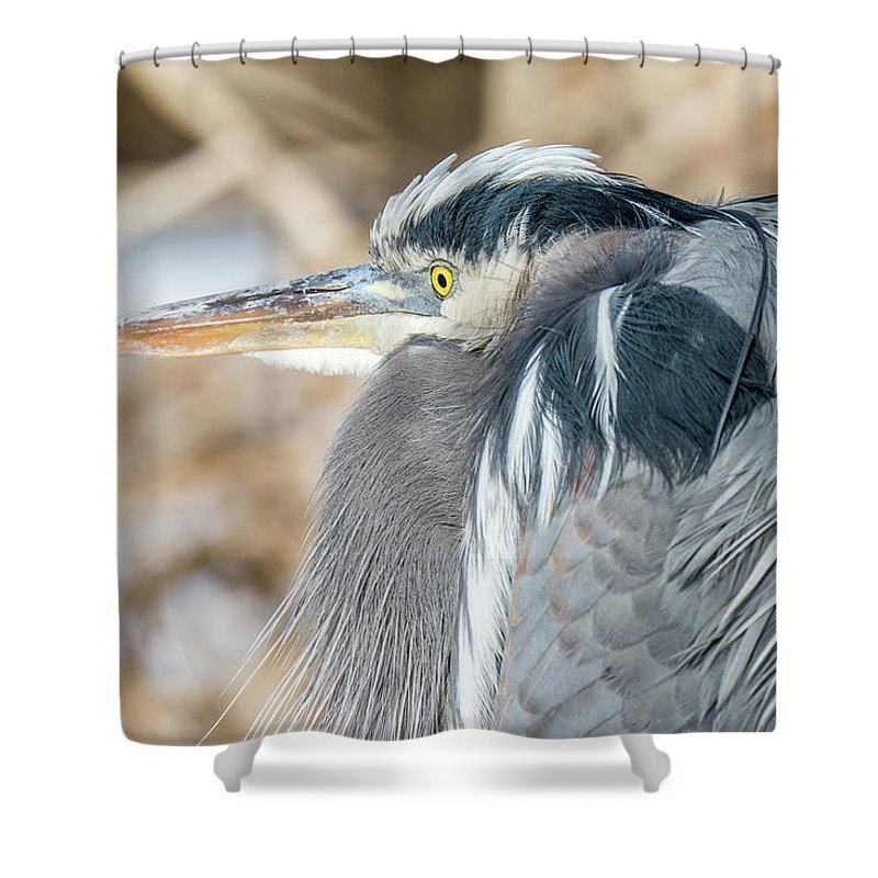 Great Blue Heron Shower Curtain featuring the photograph Great Blue by Brenda Gooder